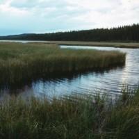 wetlands in the Everglades