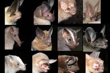screenshot from webinar of various bat species